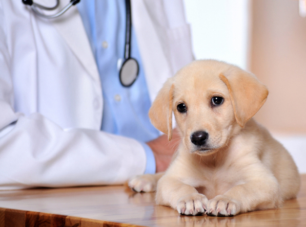 Sacramento, CA. Pet Clinic Insurance